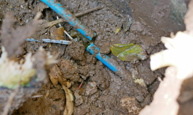 Top 5 Ways to Prevent Tree Roots From Damaging Your Plumbing System