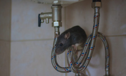 Critters That Can End Up In Your Plumbing
