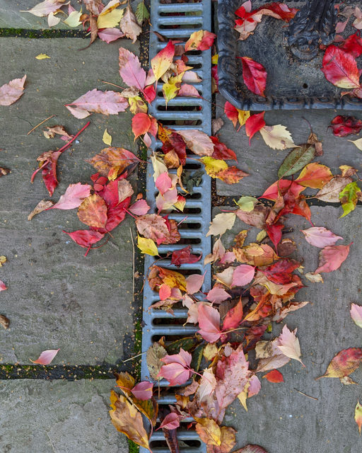 Frightful Foliage: How Fall Leaves Can Be a Nightmare For Your Sewer
